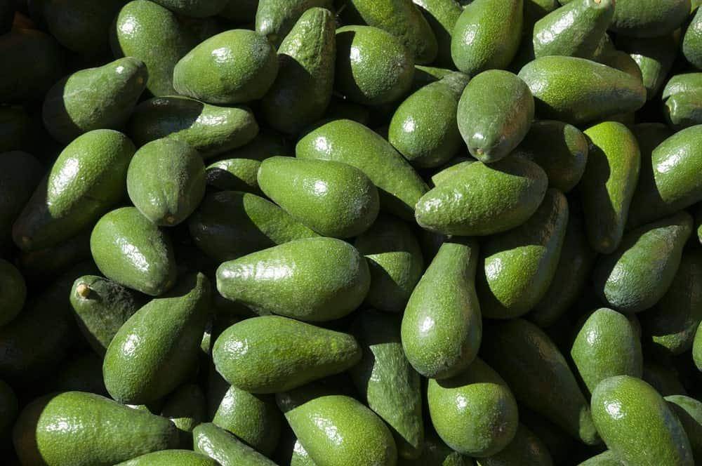 Ettinger avocados
