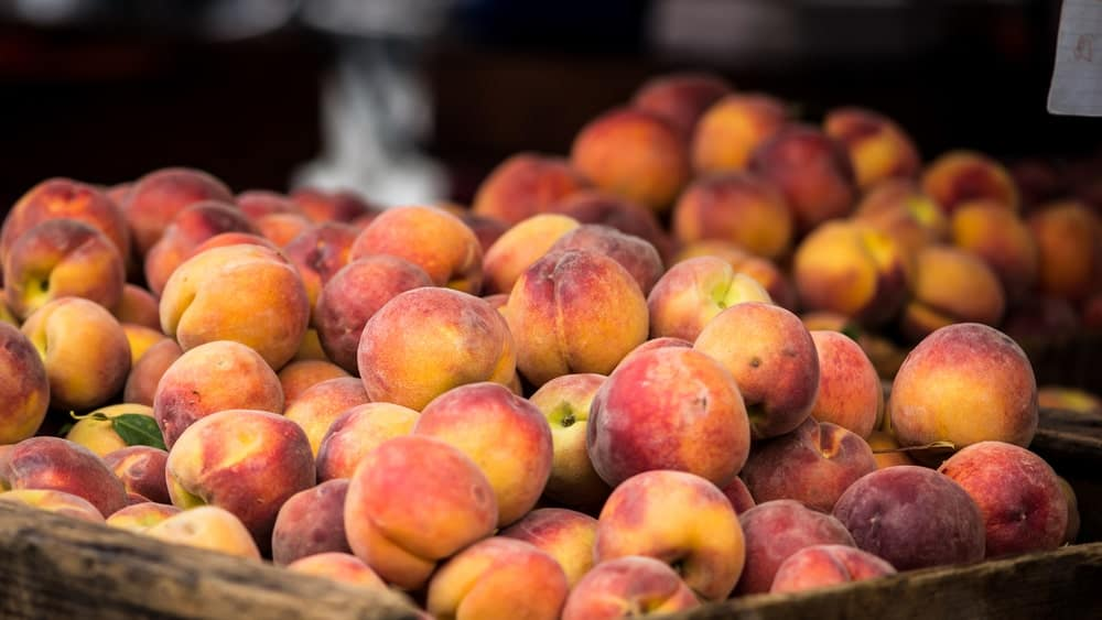 Freestone peaches in a basket.