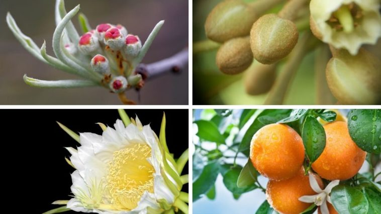 A variety of fruit tree flowers.