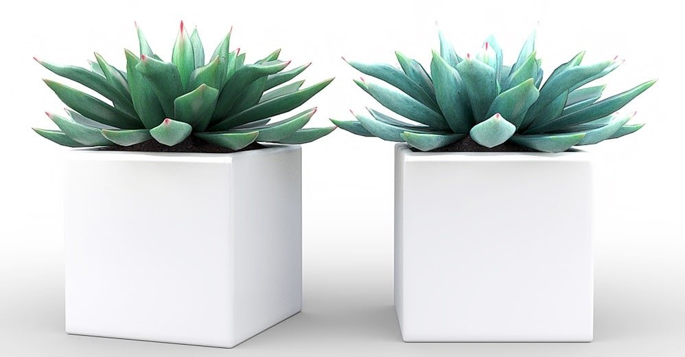 A pair of plant cubes.