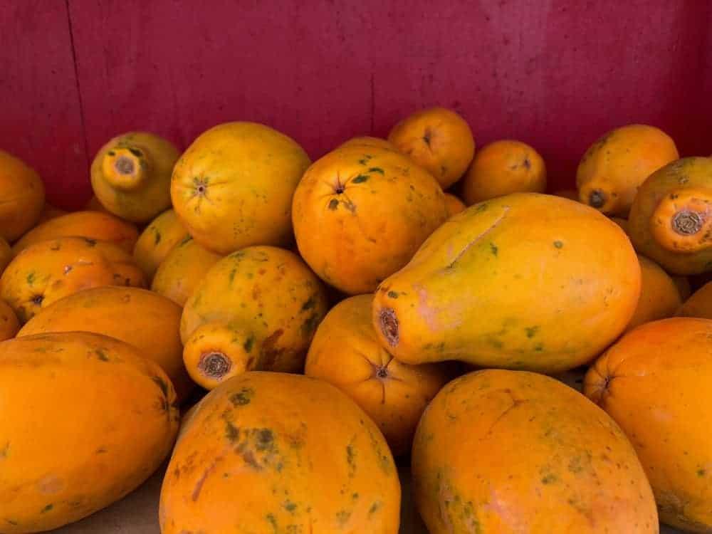 Hawaiian papayas against the red backdrop.