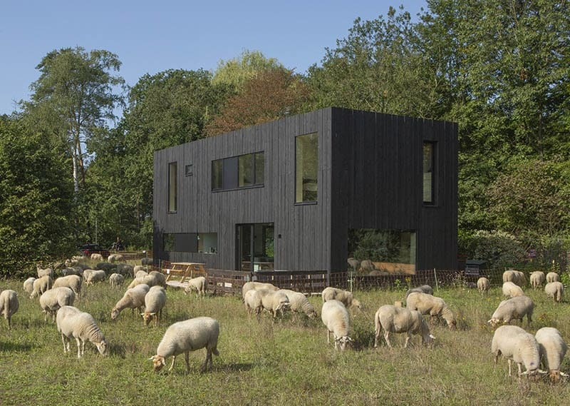 This is a view of the modern black house from the back field. Here you can see the matte dark exterior walls paired well with large glass walls and windows.