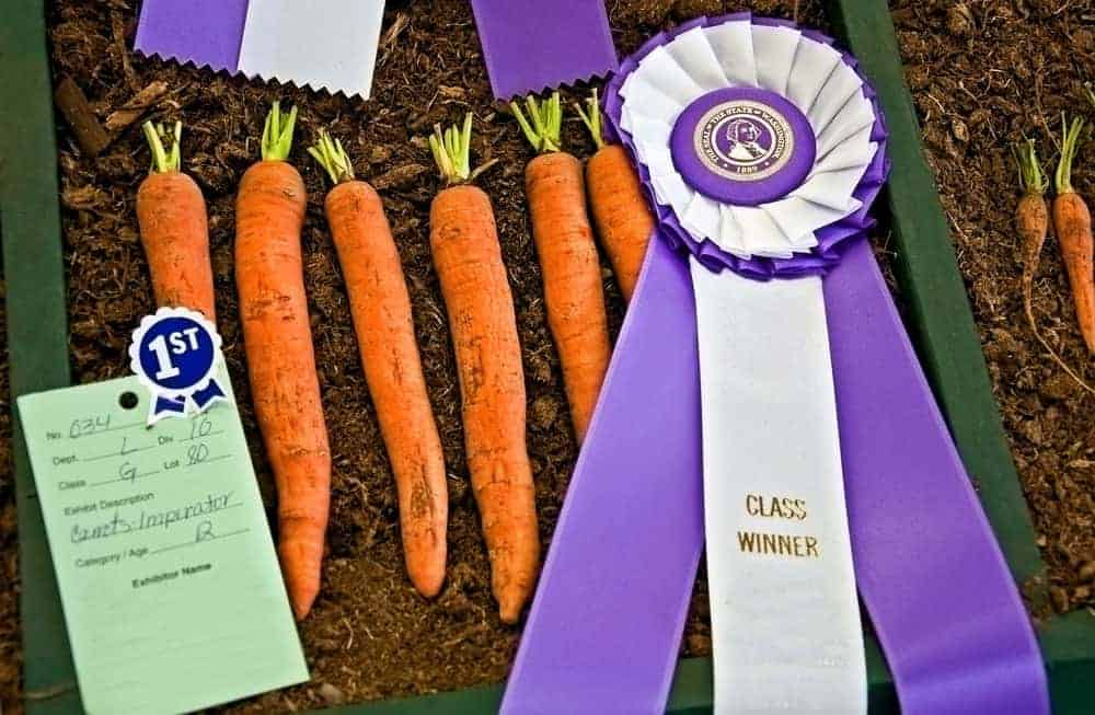 Imperator carrots with 1st place ribbon.