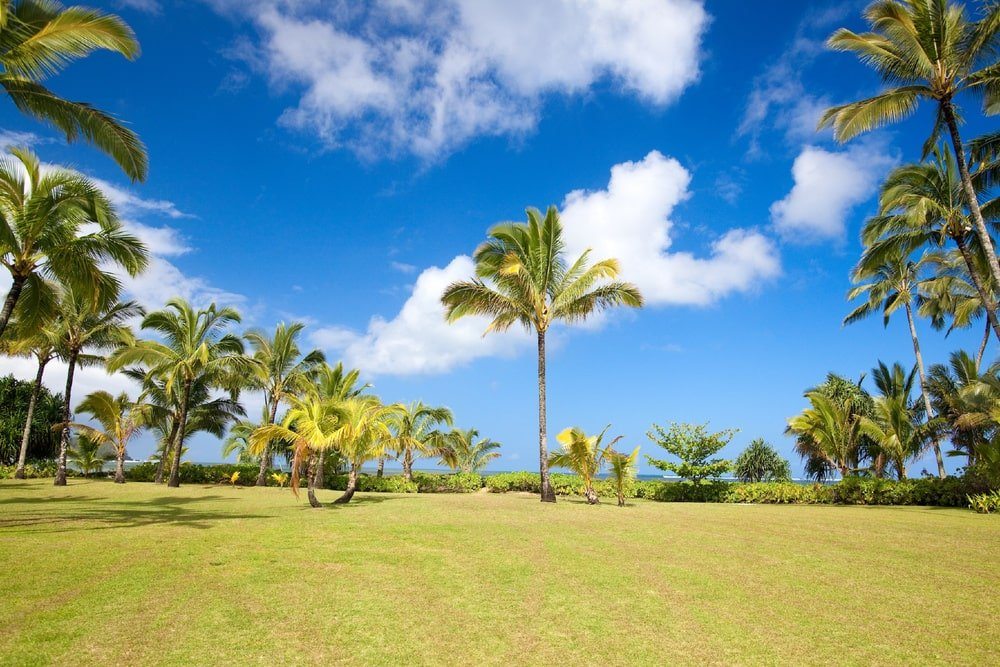 This is a close look at the landscape showcasing the tall tropical trees and spacious grass lawn. Image courtesy of Toptenrealestatedeals.com.
