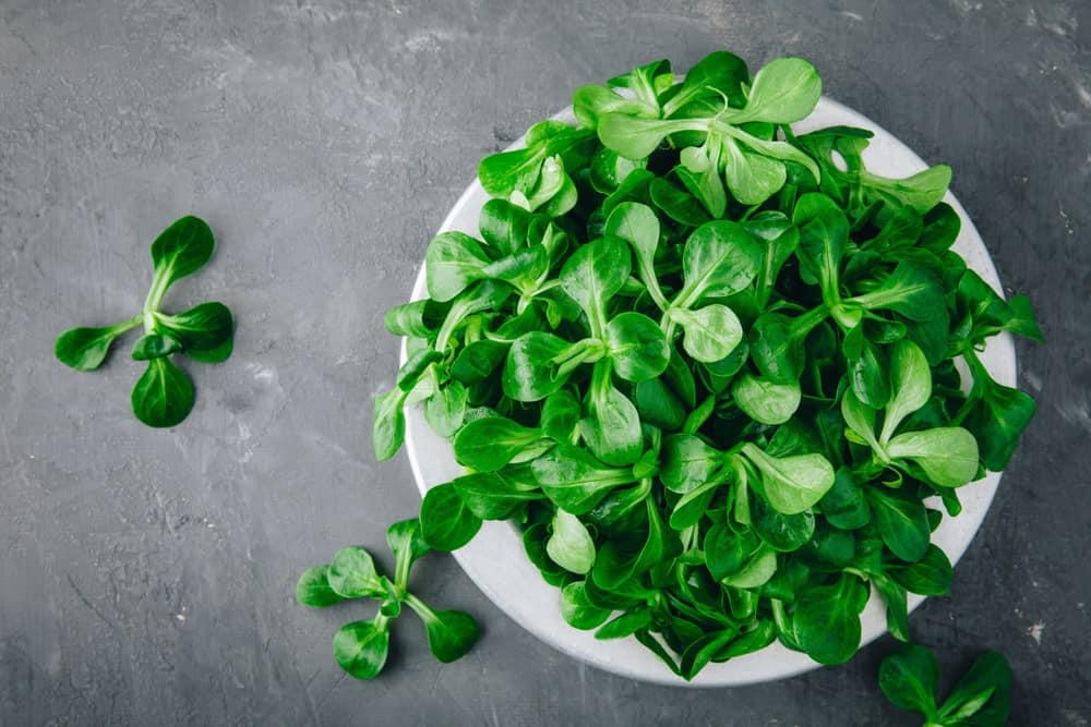 Lambs' lettuce in a white bowl.