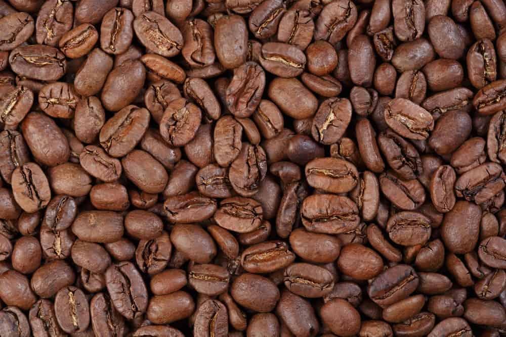 Maragogype beans