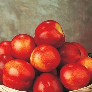 A basket filled with May Grand nectarines