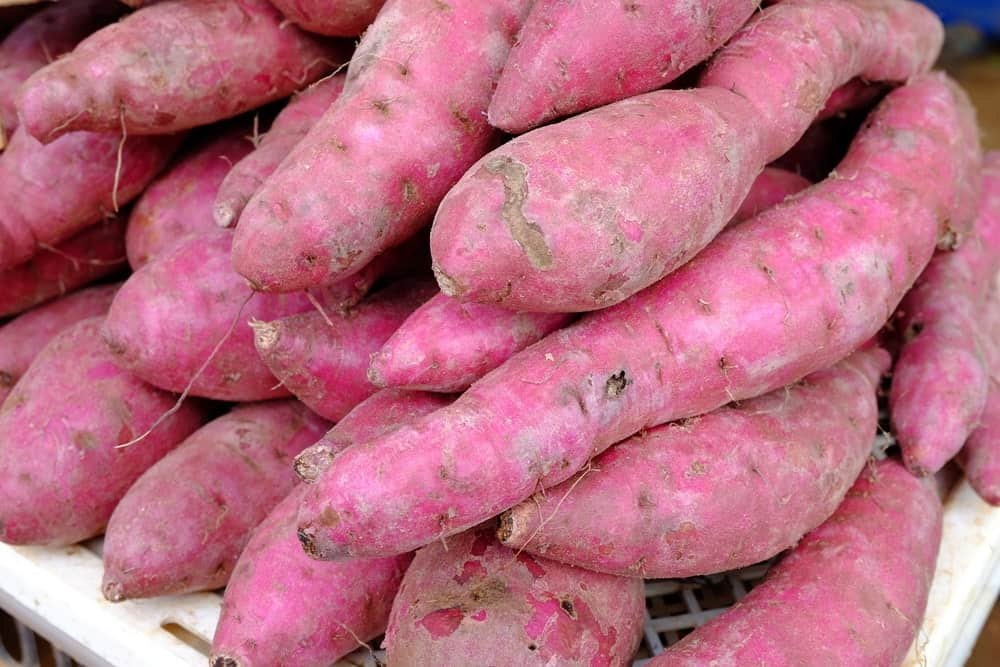 Oriental sweet potatoes