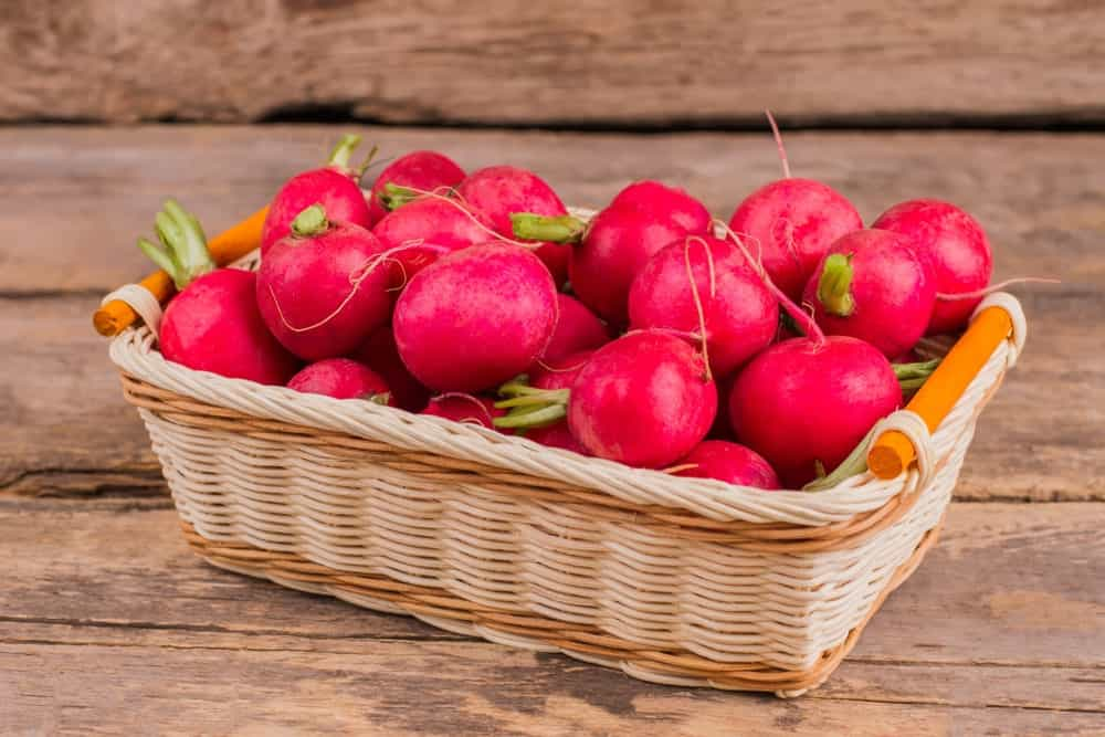 Pink Beauty radishes on a rattan basket.