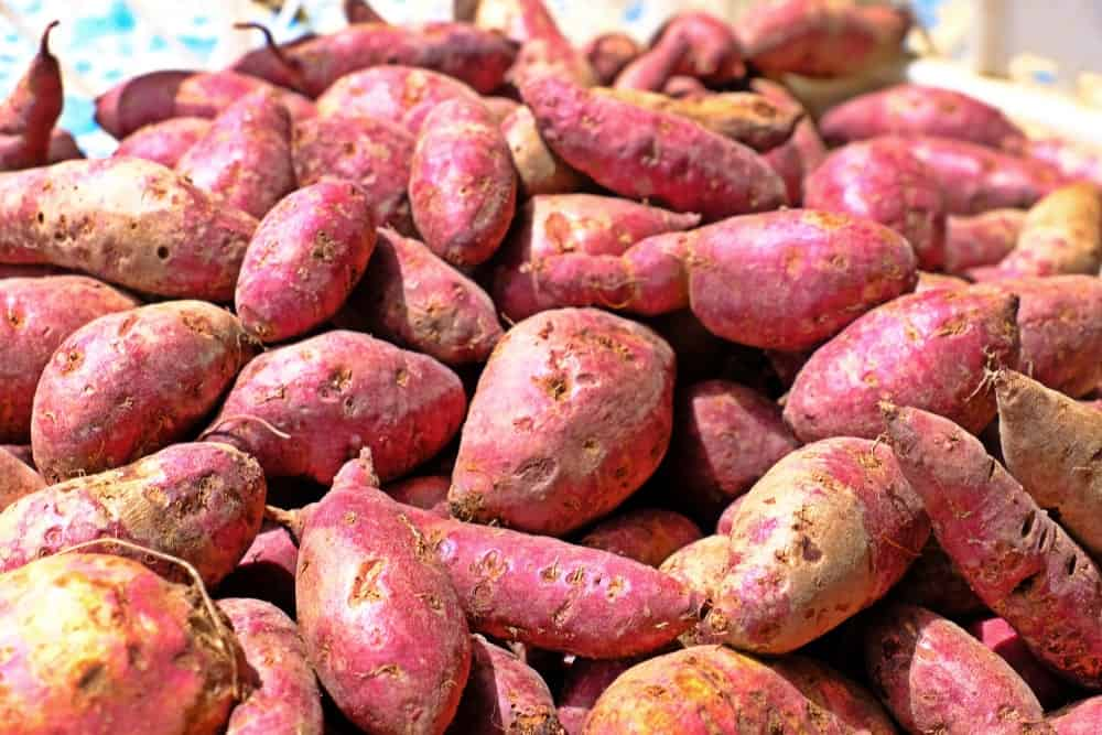 Red jewel sweet potatoes