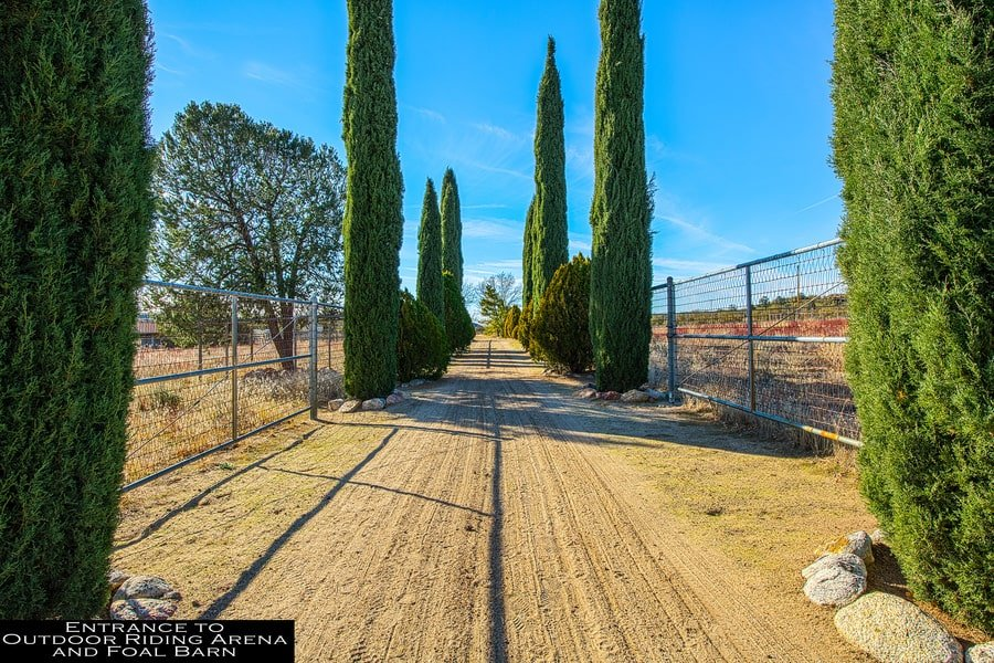 This is the driveway leading to the outdoor riding arena and foal barn. This is adorned with tall trees on the sides. Image courtesy of Toptenrealestatedeals.com.