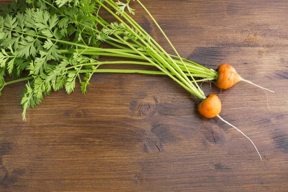 A pair of Romeo carrots against a wooden table.