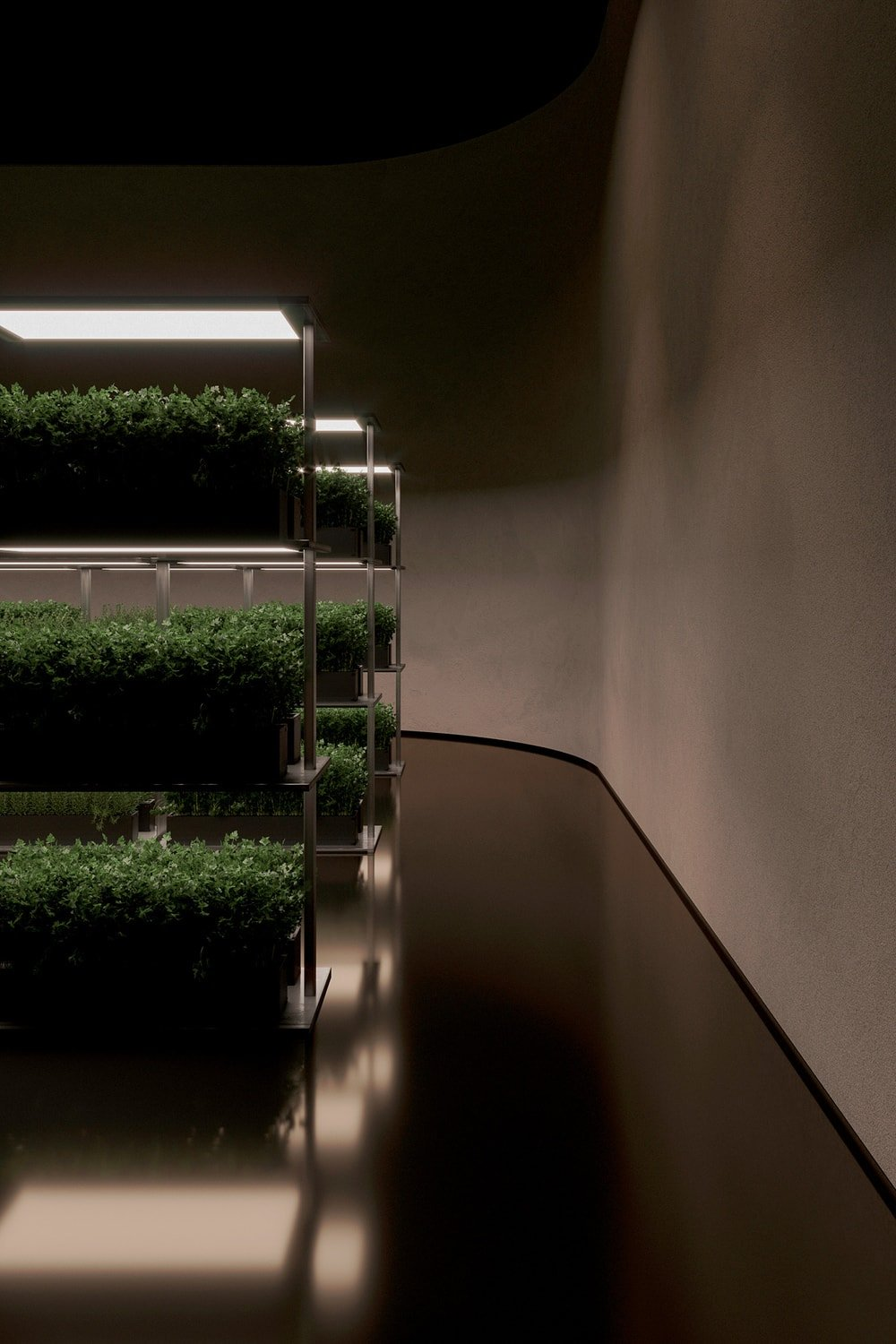 These are placed on large metal structures that have three tiers of shelves for the plants.