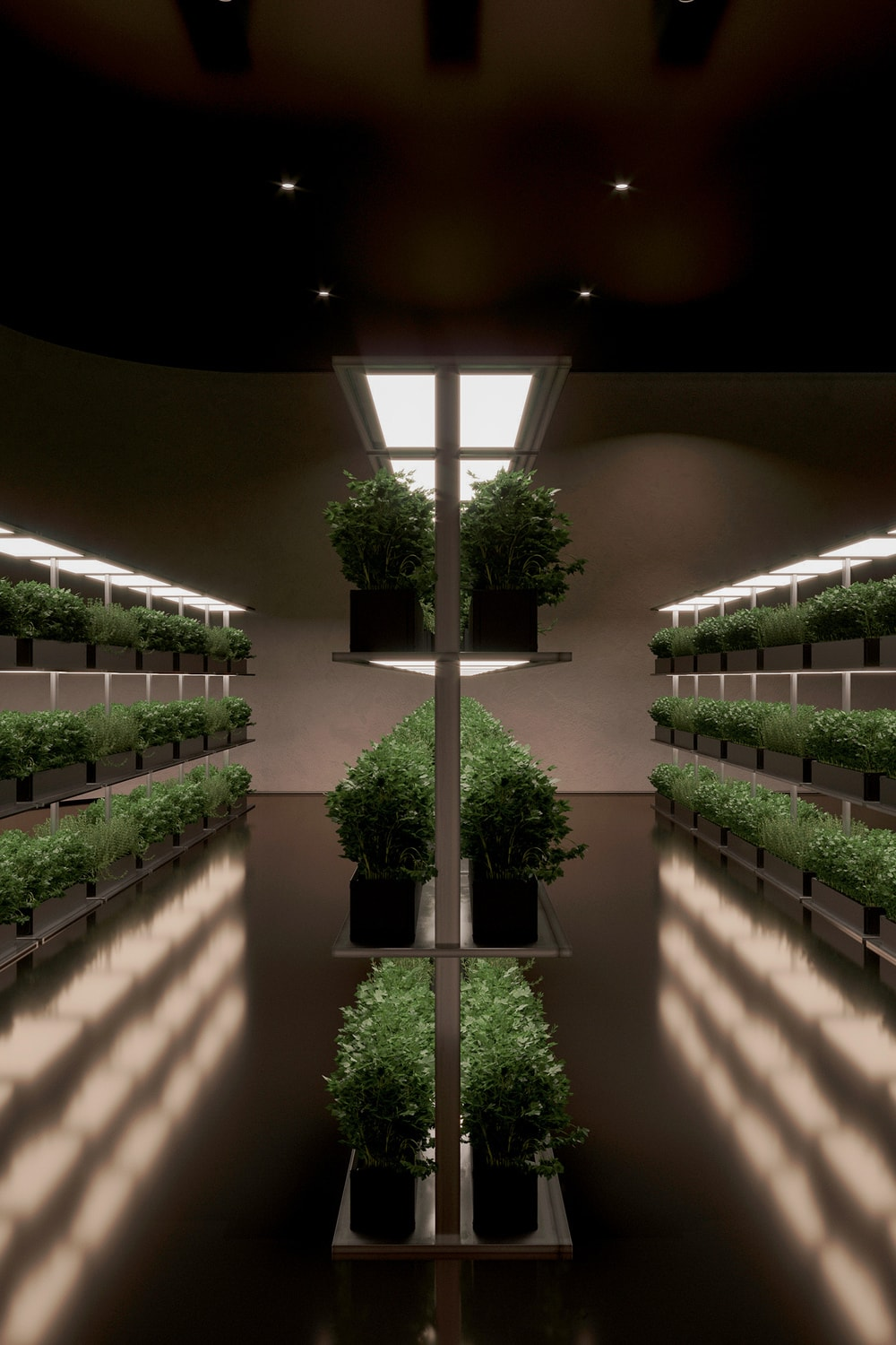 This is the underground greenhouse of the house with rows of potted vegetables and herbs.