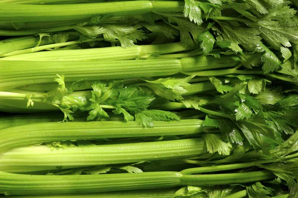 A close look at a cluster of fresh celery.