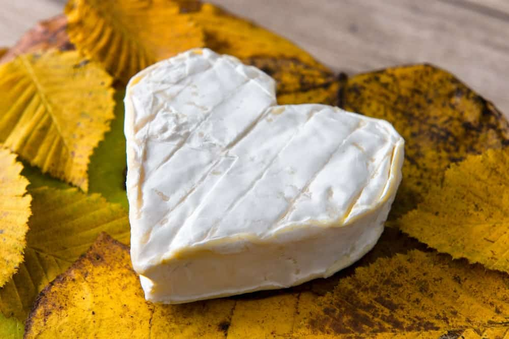Heart shaped Neufchatel cheese on autumn leaves.