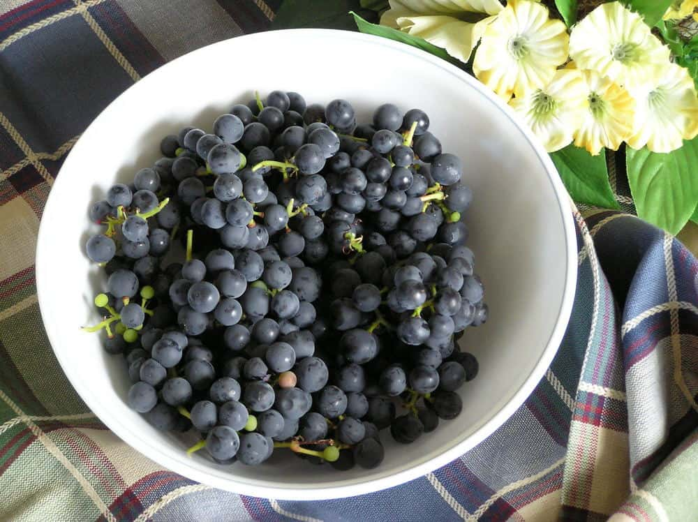 Valiant grapes in a white bowl against the checkered table mantel.