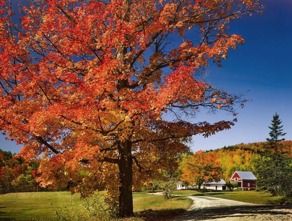This is a close look at the landscaping of the estate showcasing a tall tree with autumn colors. Image courtesy of Toptenrealestatedeals.com.