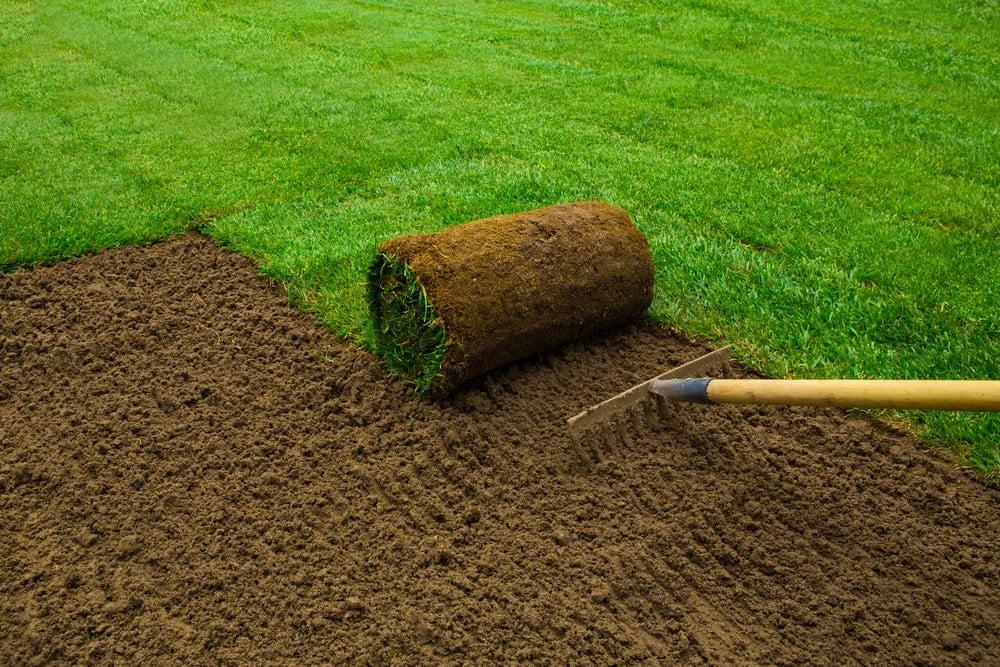A gardener lightly raking the soil before installing the carpet of grass.