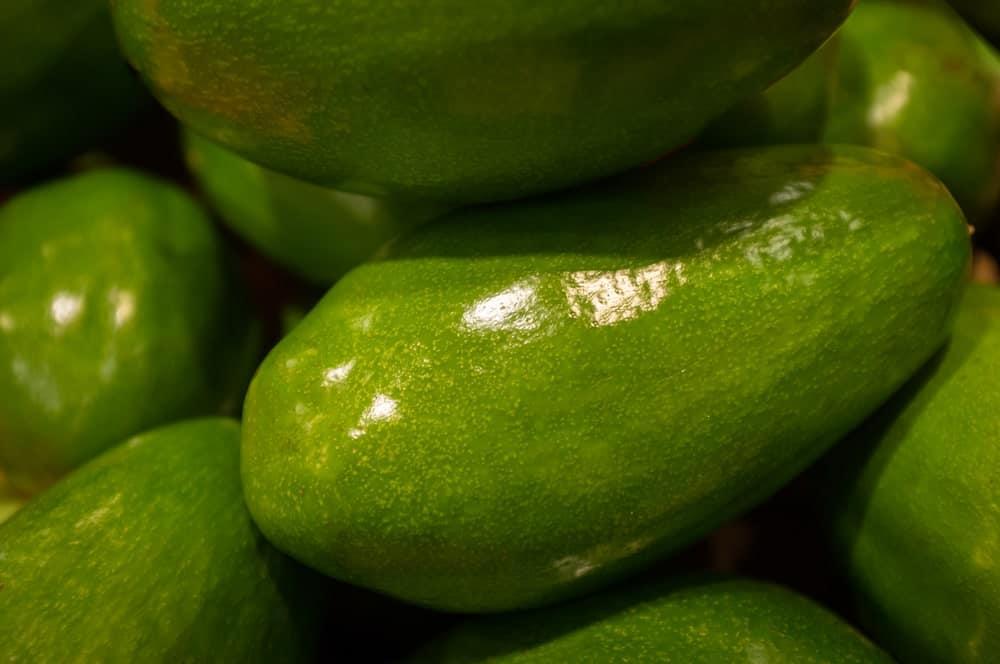 Zutano avocados