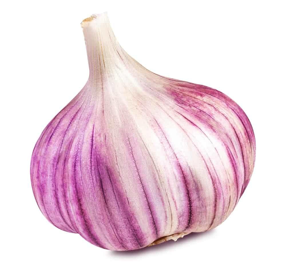 Asiatic garlic