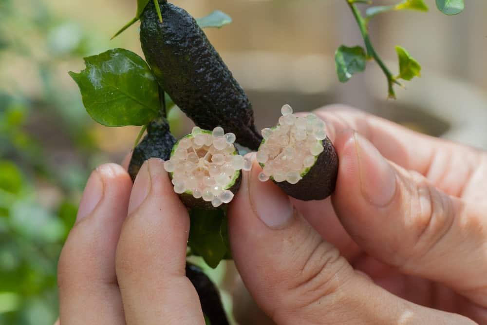Australian Desert lime cut in half.