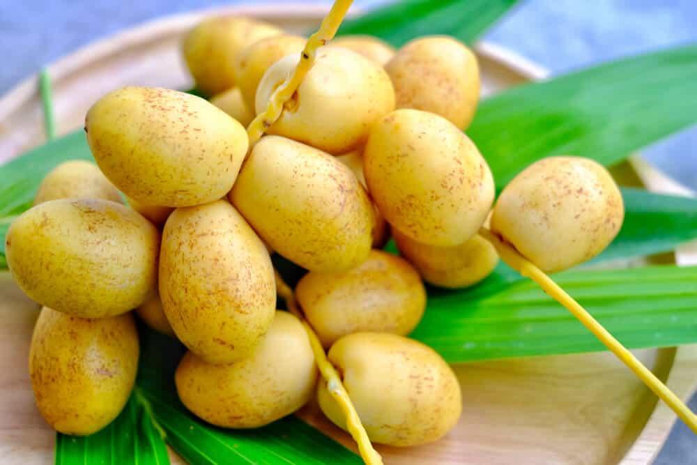 Freshly-picked Barhi dates.