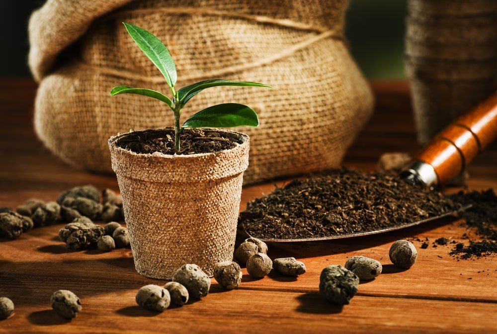 A rustic potted plant next to a shovel of soil.