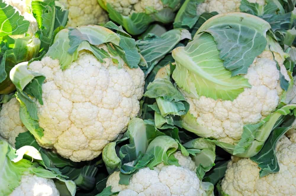 European cauliflowers