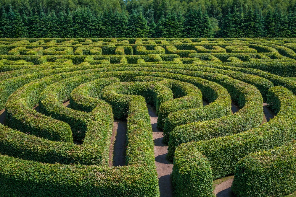 Top view of a hedge labyrinth.