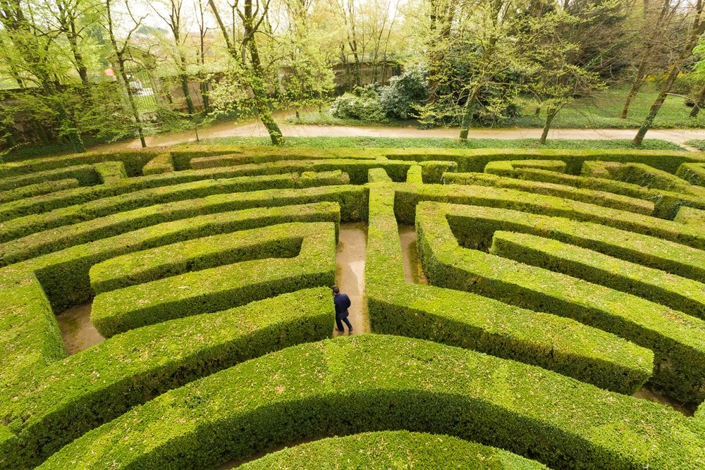 A man in the middle of a hedge labyrinth.