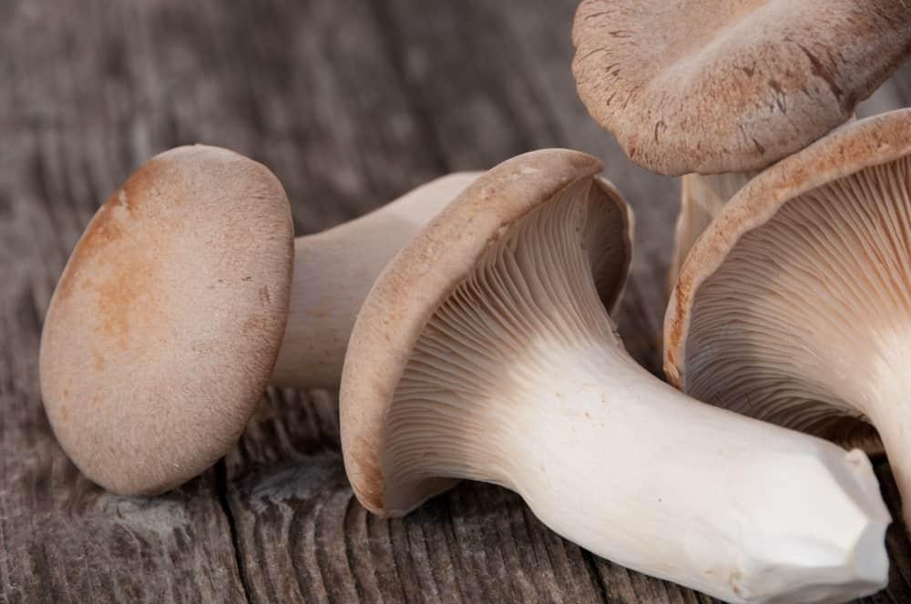 King Trumpet mushrooms on a wood plank table.