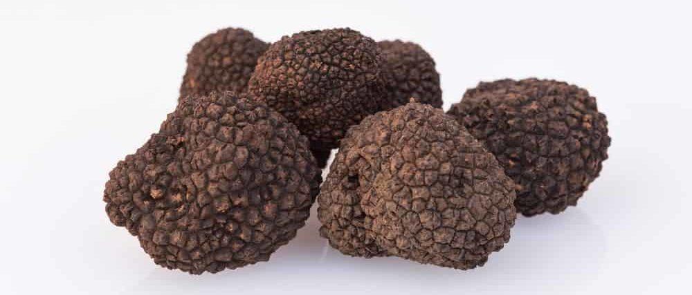 Périgord/Spoleto truffles