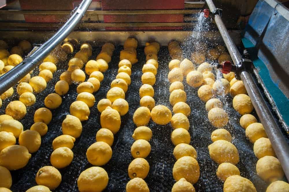 Primofiore lemons being washed at a production line.