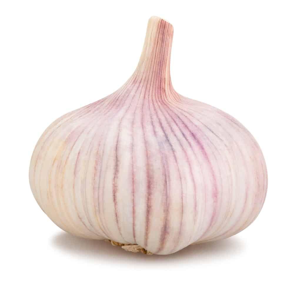 Purple Stripe garlic