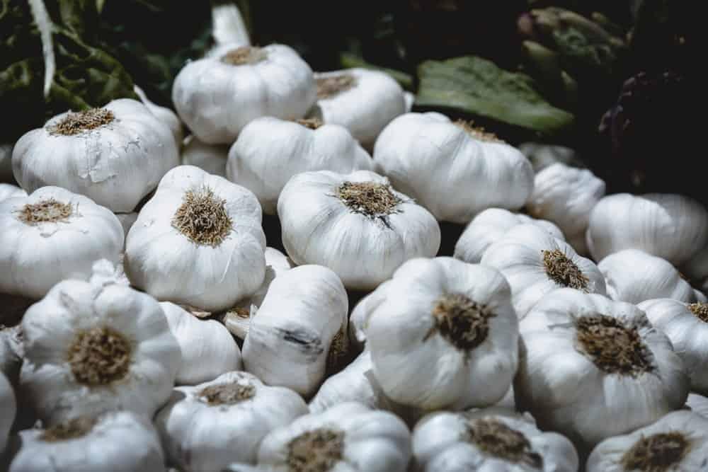 Softneck garlic