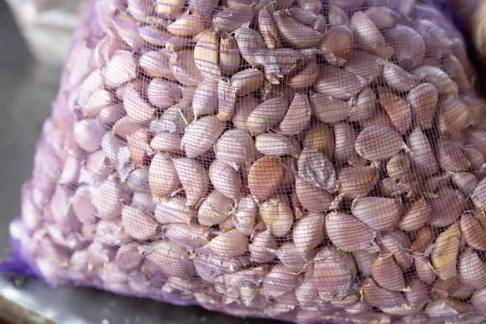 A mesh bag full of turban garlic.