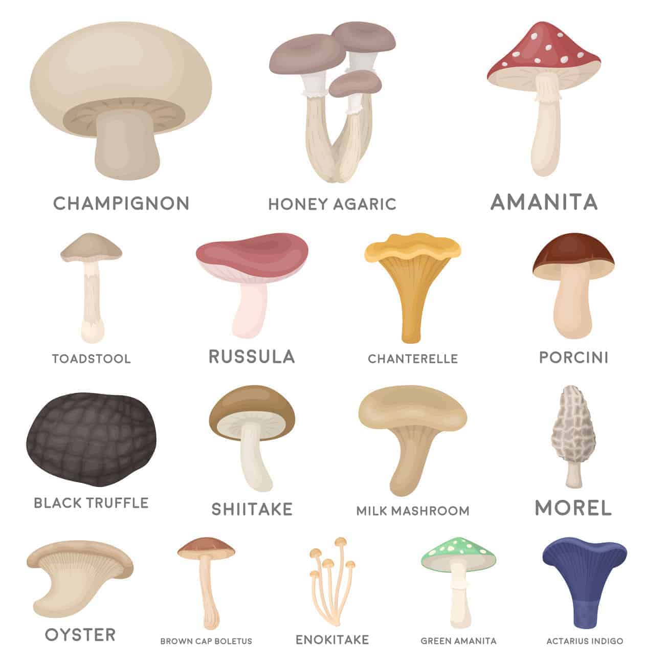 Types of Mushrooms Chart