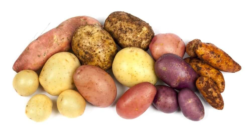 A bunch of potatoes in various kinds.