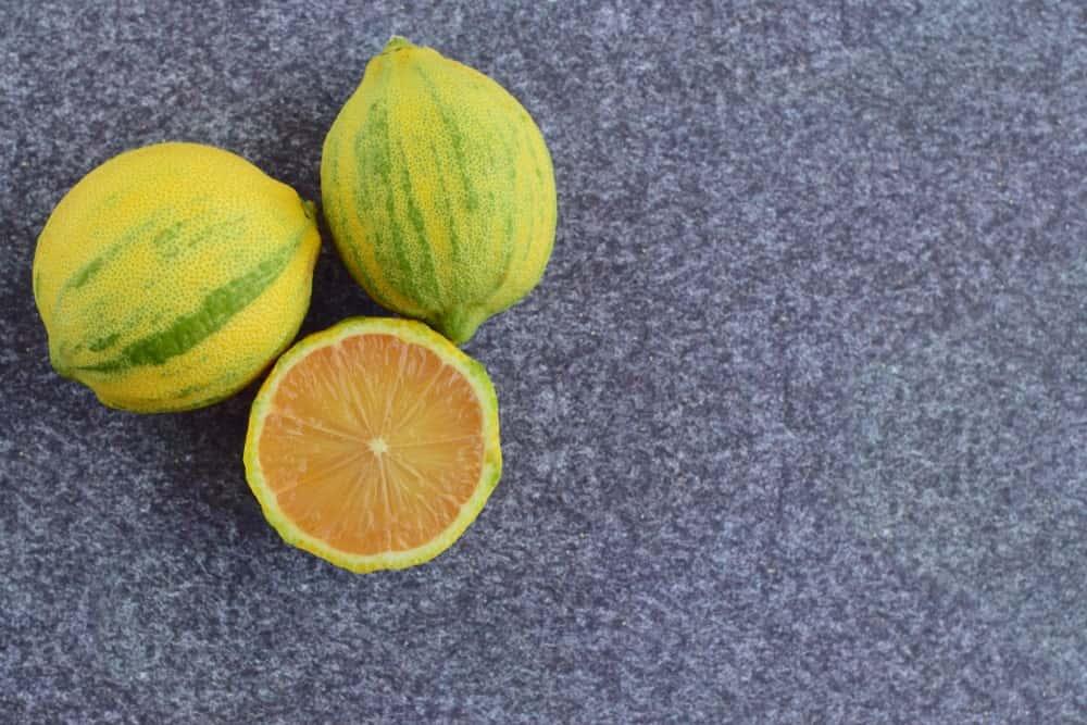 Variegated pink lemons on gray background.
