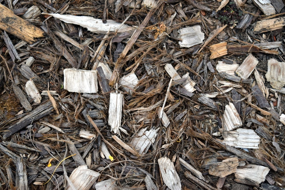 A close look at a bunch of wood chips on the ground.