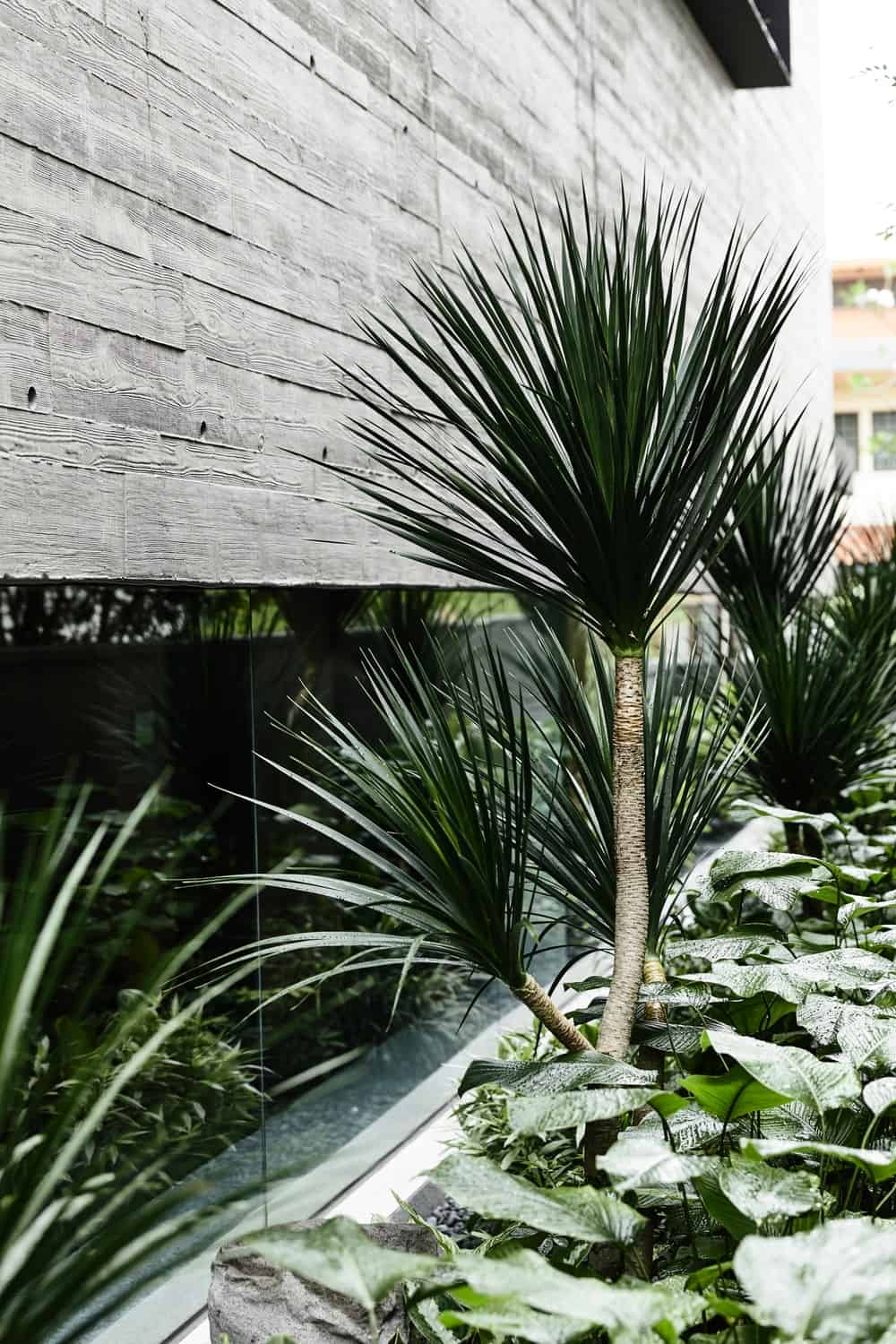 This textured gray wall is adorned with a lush landscaping of tropical plants and shrubs and glass panels at the base.