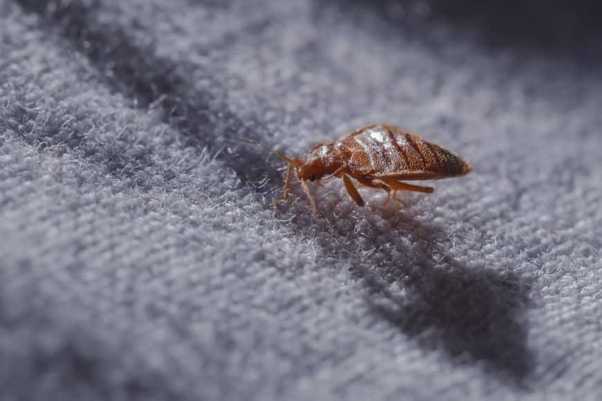 A bug crawling on a gray carpet.