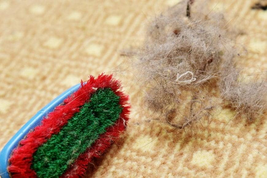 Multicolored brush with pet hair on a patterned carpet.