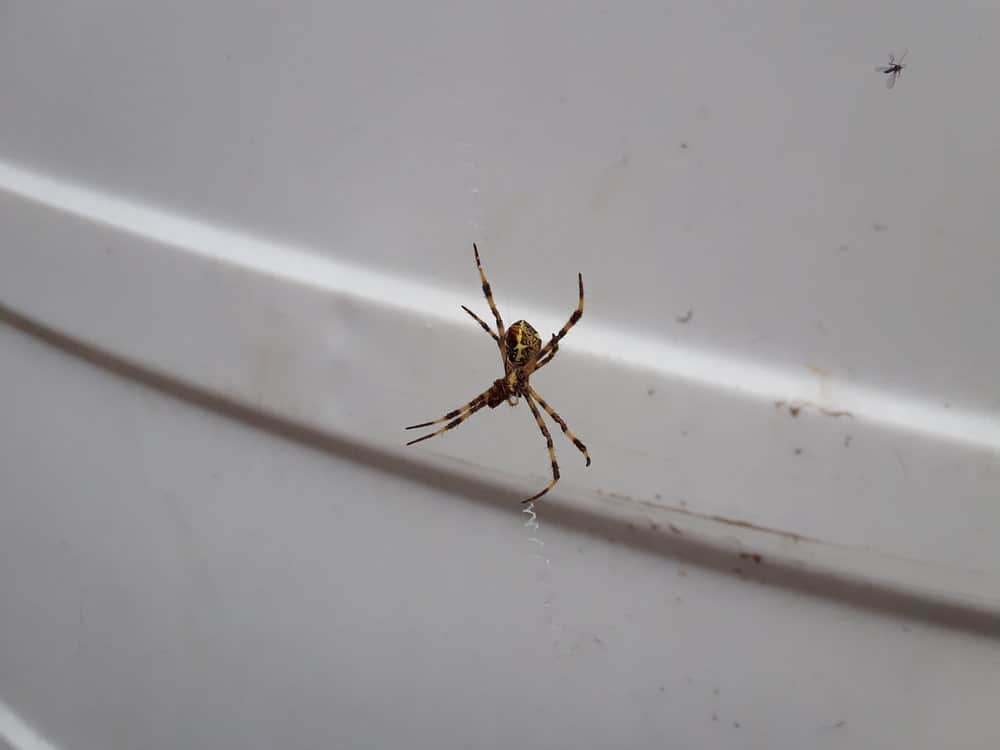 A spider on its web inside the closet.