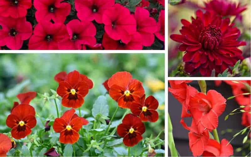 Collage of red flowers.