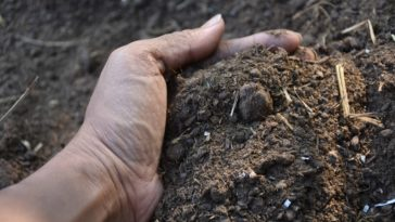 A woman holding a handful of healthy soil.