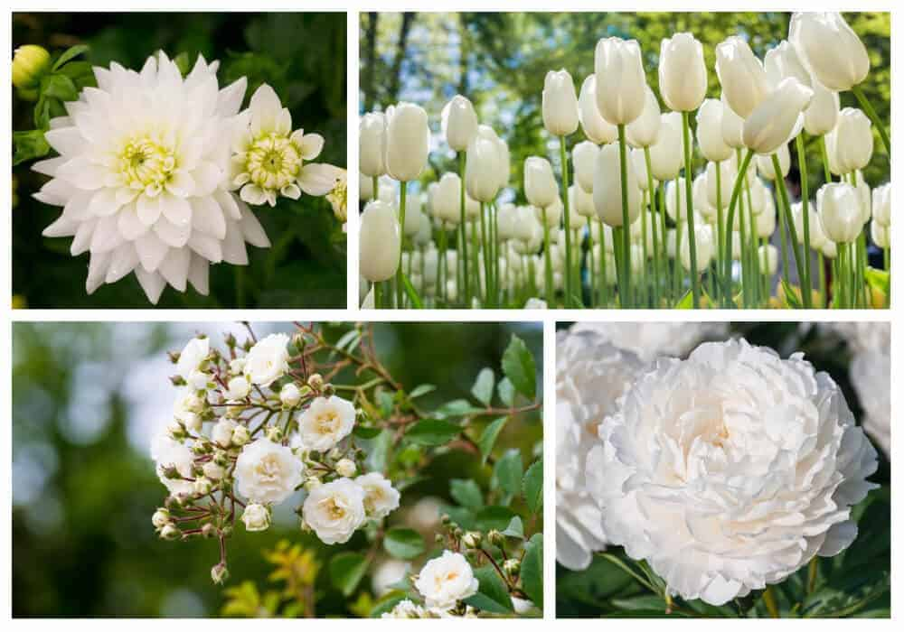 Collage of white flowers.