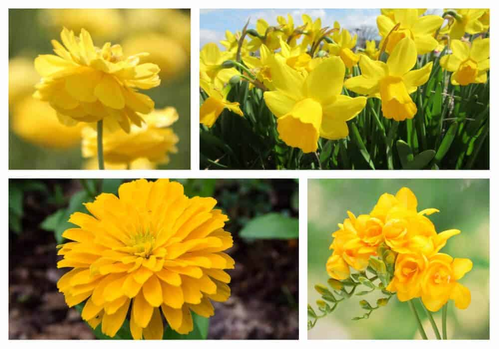 Collage of yellow flowers.