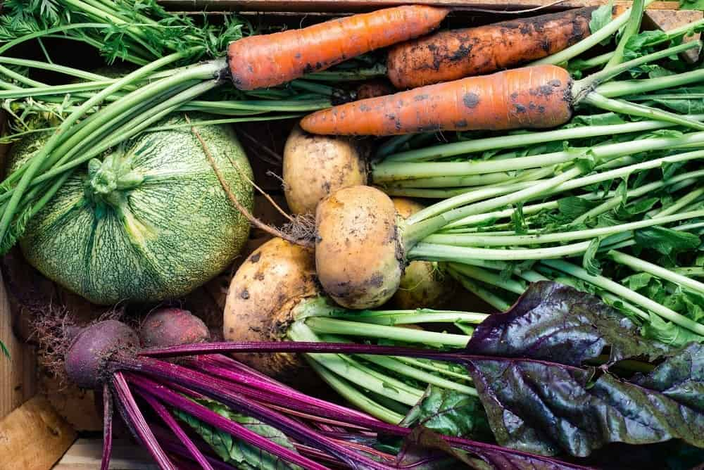 A close look at freshly-harvested vegetables.